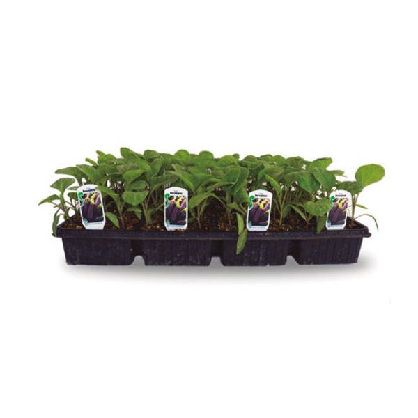 Hortícolas: Productos de Garden La Palma