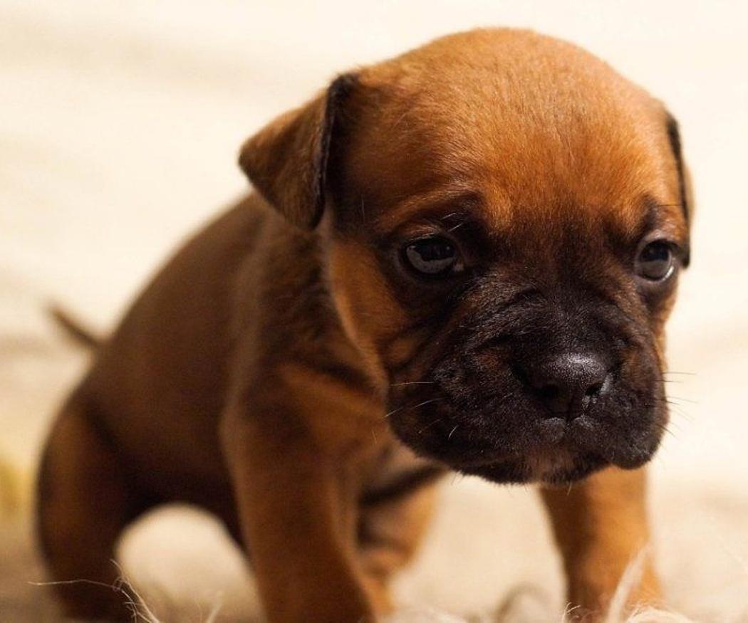 ¡No permitas que tu perro se deprima!