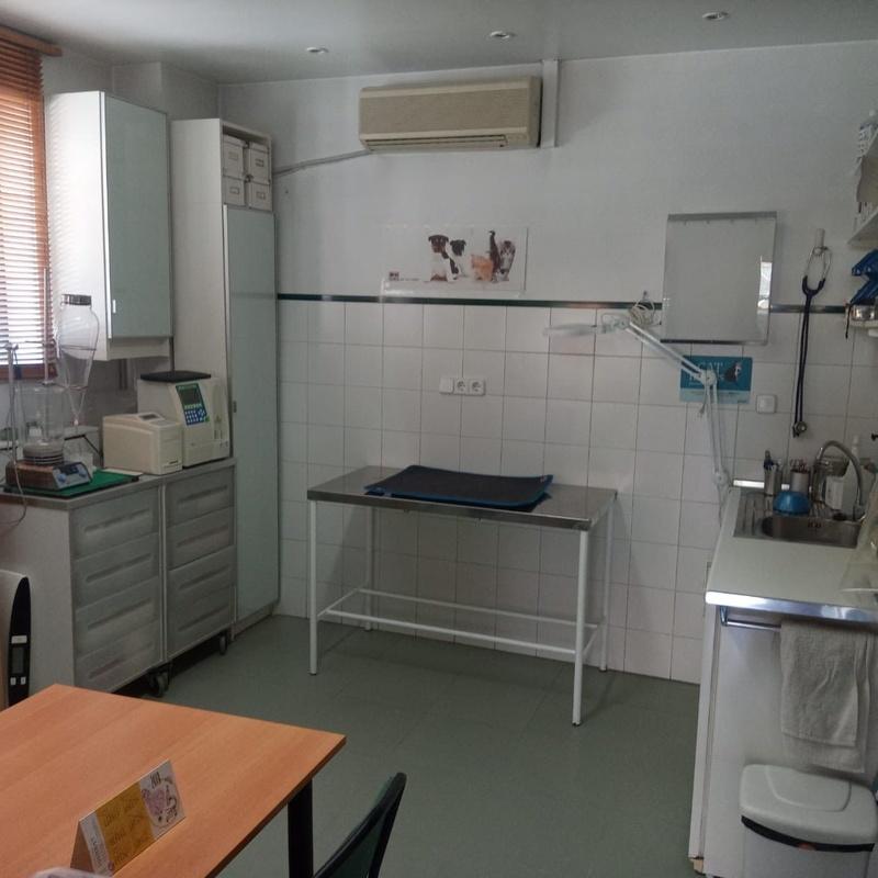 Medicina y cirugía en general: Servicios de Centro Veterinario Lucas