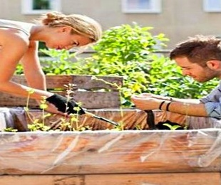 Cultiva tu propio huerto