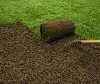 Diseño de jardines: Servicio de Verderalia Jardinería
