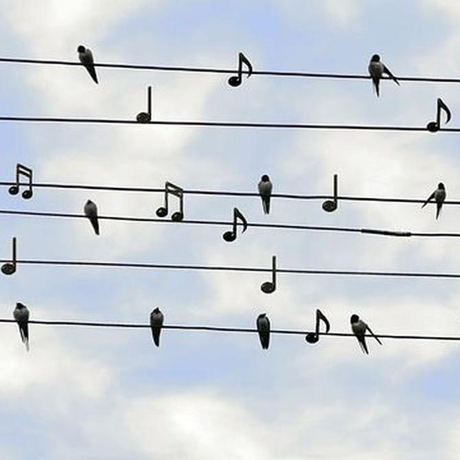 Las bondades de la música para la sociedad y para nuestra salud emocional