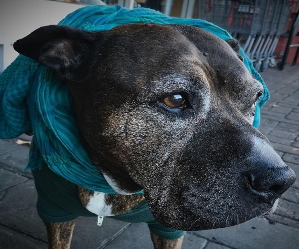 El cuidado de las mascotas ancianas