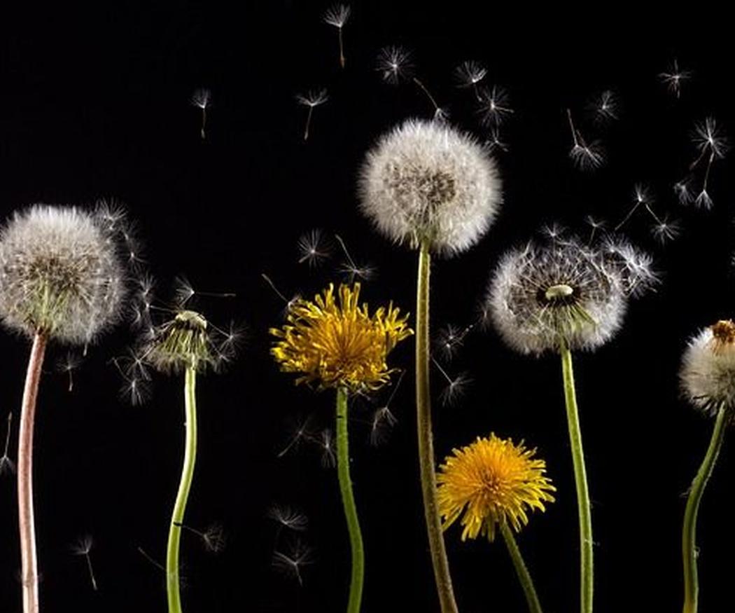 Precaución para conductores con alergia al polen