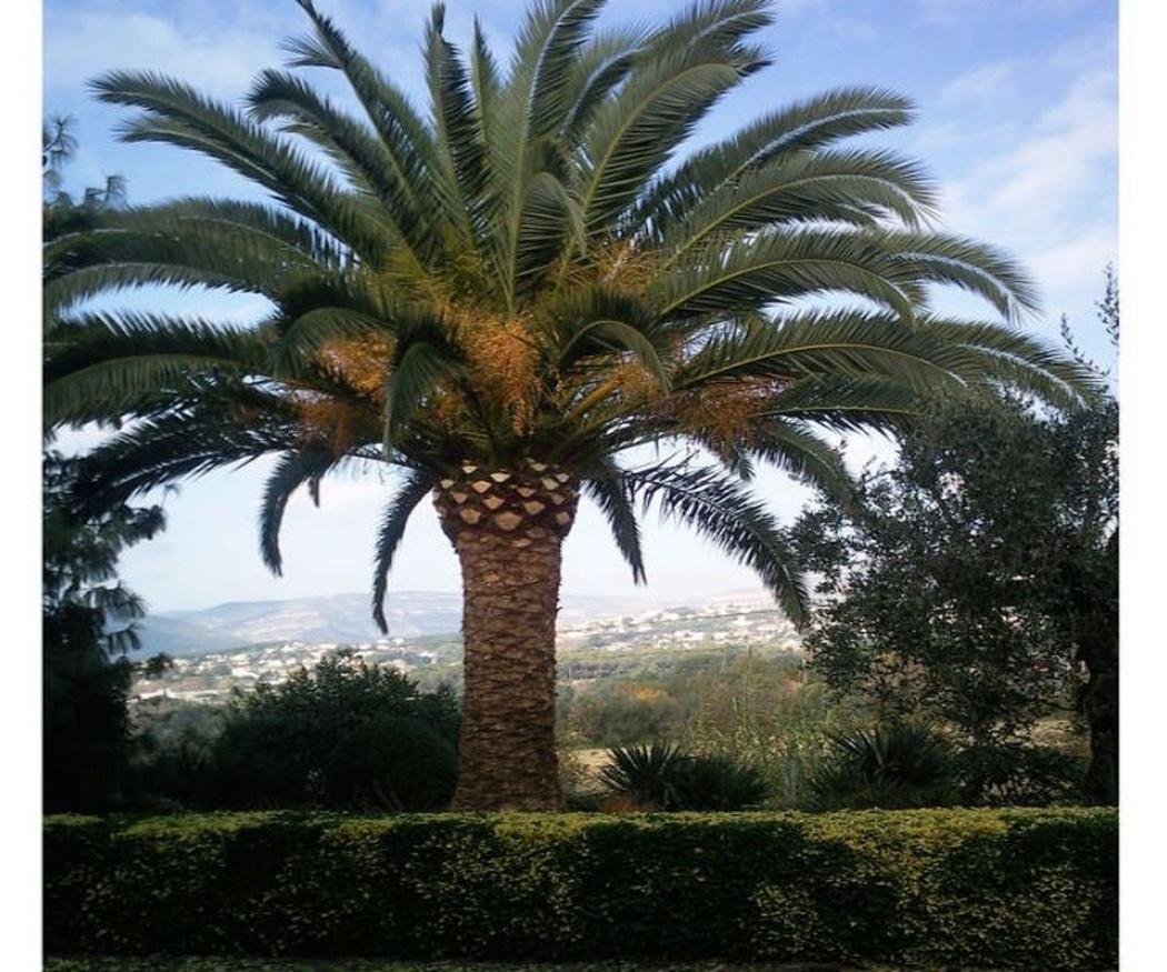 Palmeras tropicales y palmeras desérticas