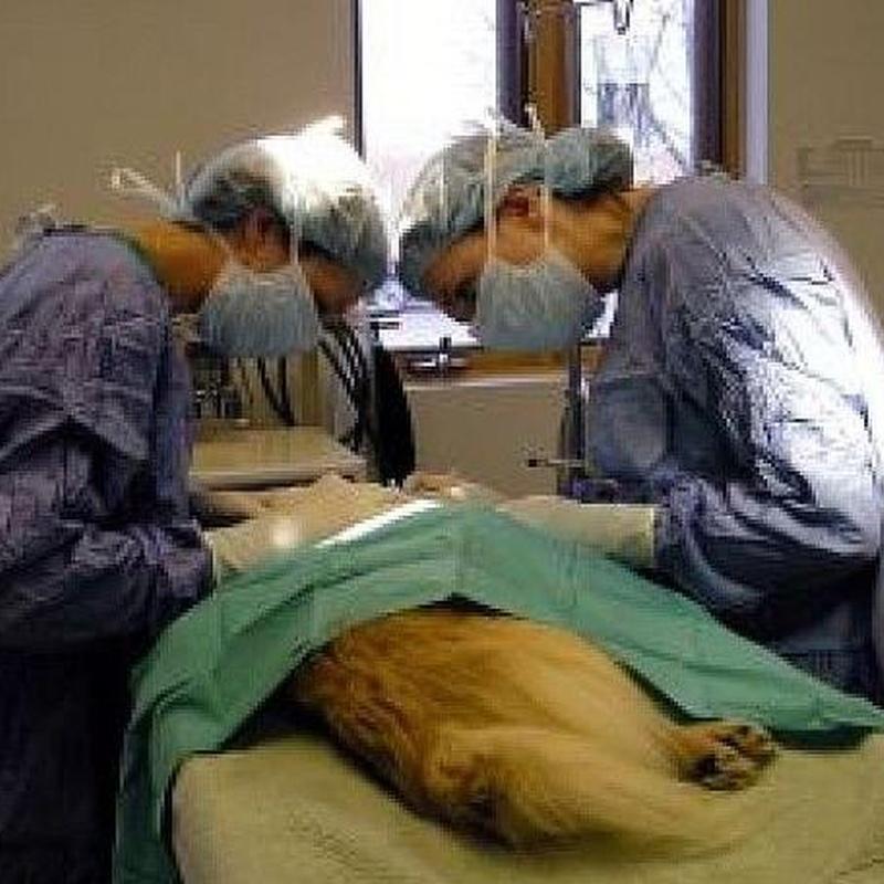 Cirugía: Servicios de Centre Veterinari de la Plana