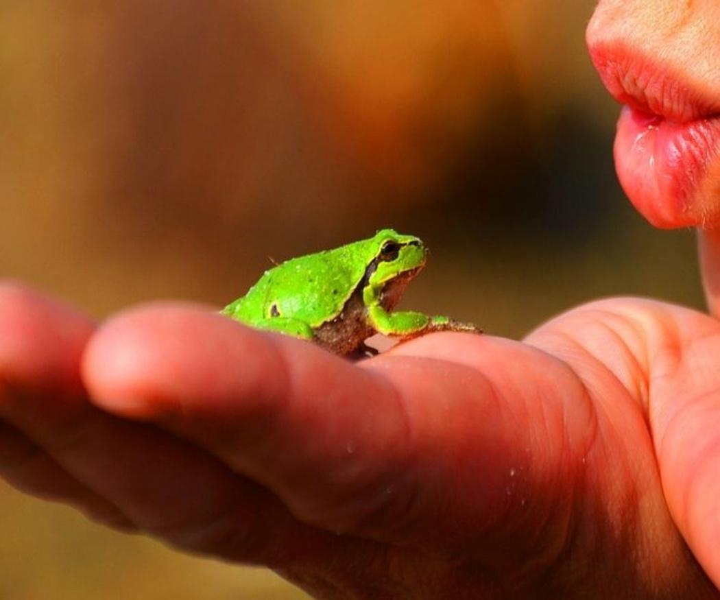 El cuidado de los reptiles como mascotas