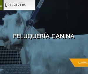 Piensos para animales en Palma | Agrícola Son Espanyolet