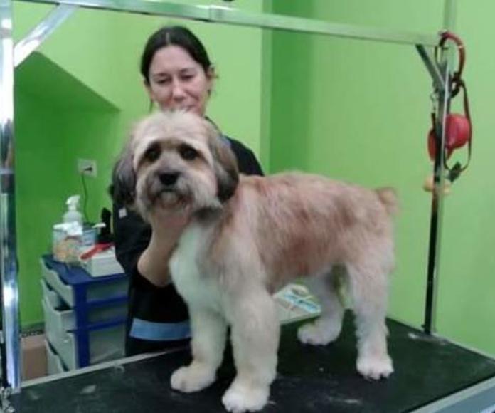 Cursos de peluquería canina: Productos y Servicios de Perruqueria Canina Milú