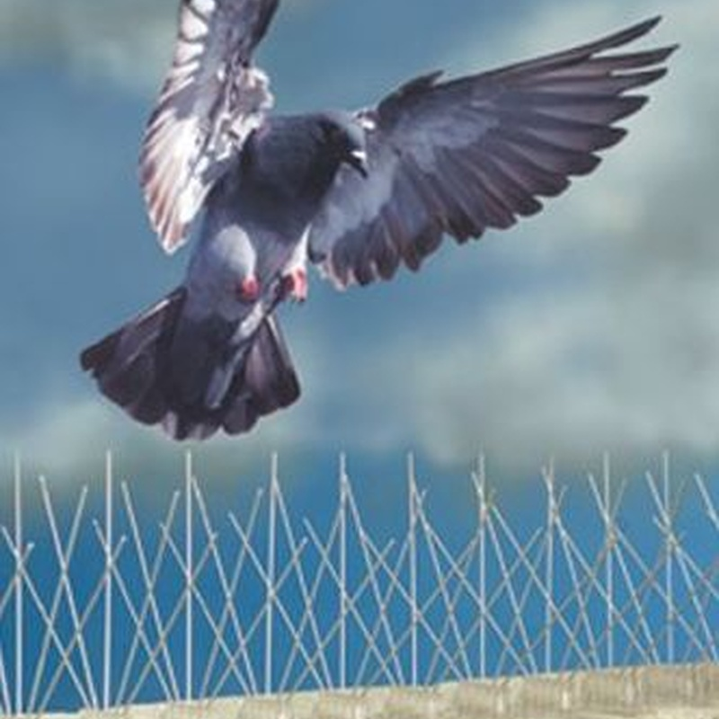 Control de plagas de palomas