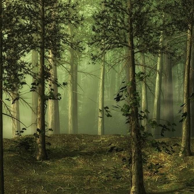 El aprovechamiento de los bosques en España