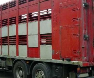 Transporte de Ovino
