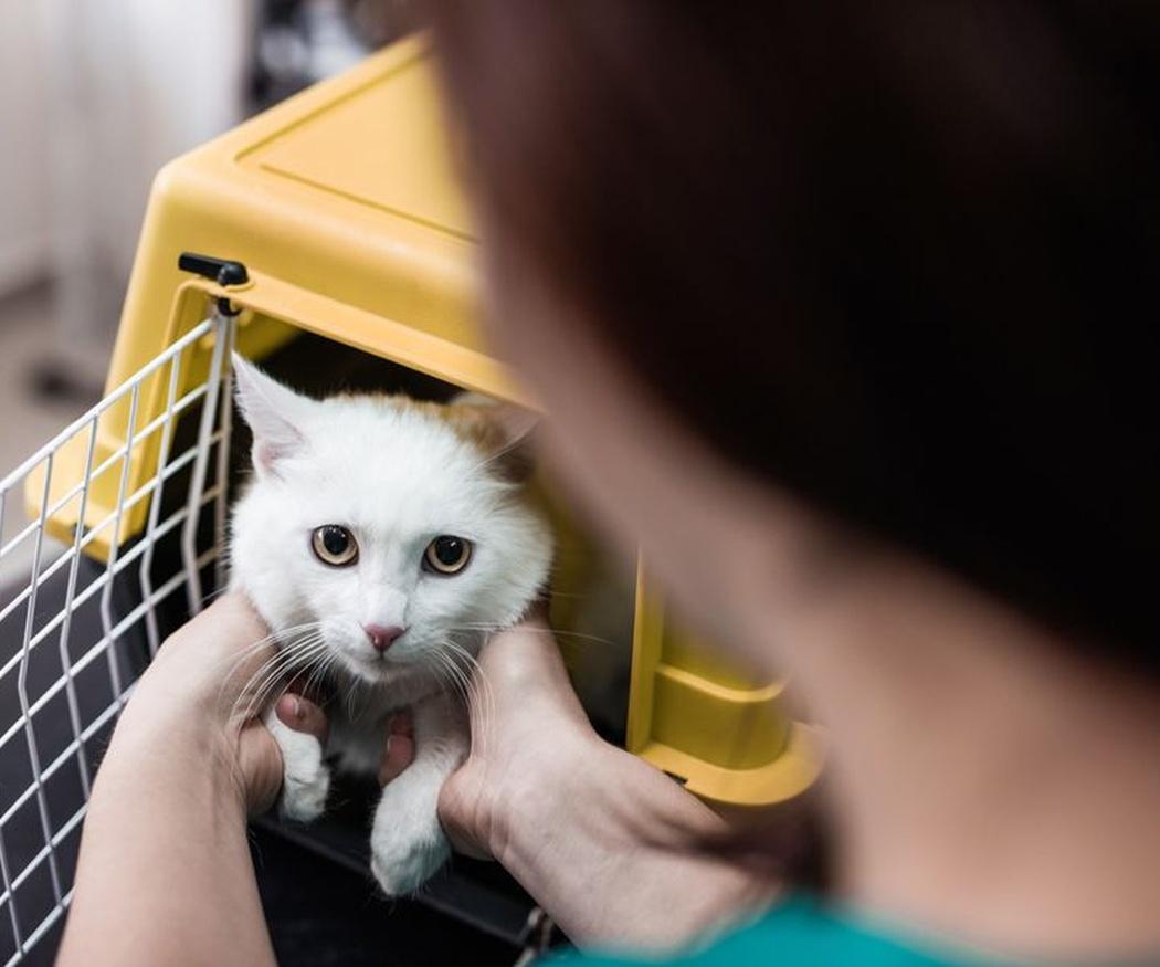 Cómo hacer una mudanza con mascotas
