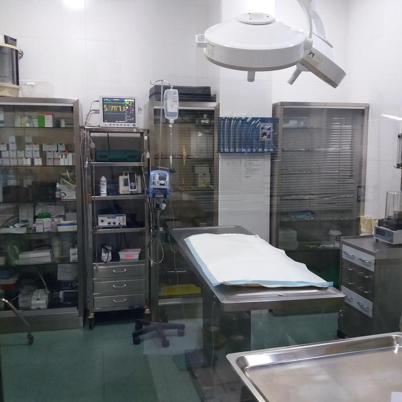 Todo tipo de servicios médicos y quirúrgicos: Servicios de Clínica principal Veterinaria Puerto Mazarrón