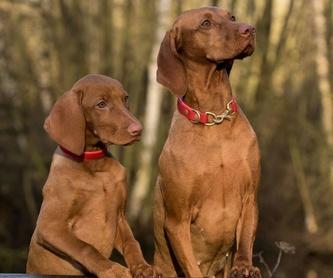 Cheniles: ¿Qué hacemos?  de Guardería Canina Estíbaliz