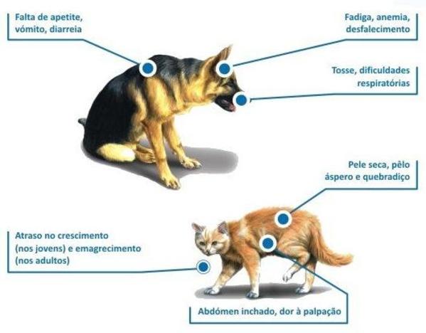 Sintomas parasitas intestinais