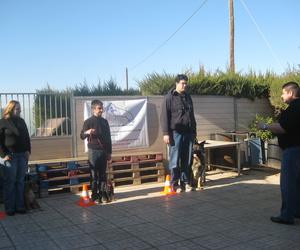 Galería de Adiestramiento canino en Cartagena | Piolcan Adiestramiento Canino y Centro de formación