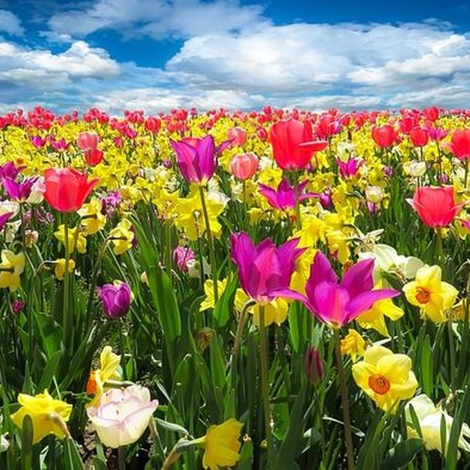 Plantas que colorean nuestro jardín en primavera