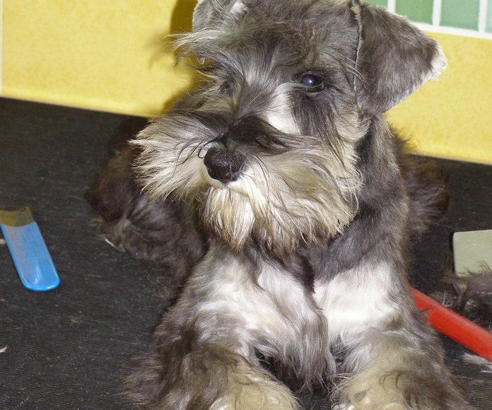 Peluquería canina y felina: Servicios de Centro Médico Veterinario Pío 109