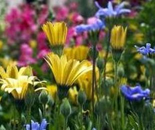 3.  Mantenimiento de jardines