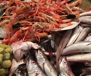 Proveïdors de peixos i mariscs a Mataró