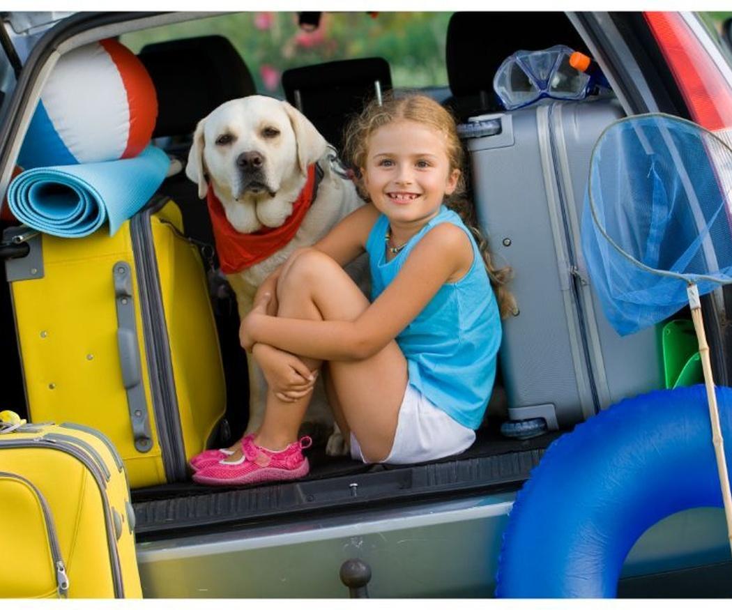 ¿Viajas sí o sí con tus mascotas?