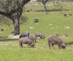 Venta de carnes sostenibles en Aranda de Duero
