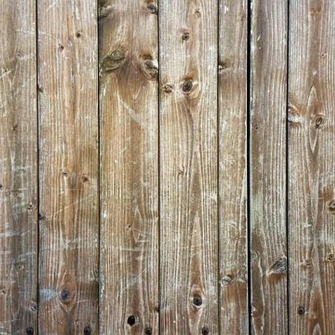 La problemática de las termitas y su eliminación