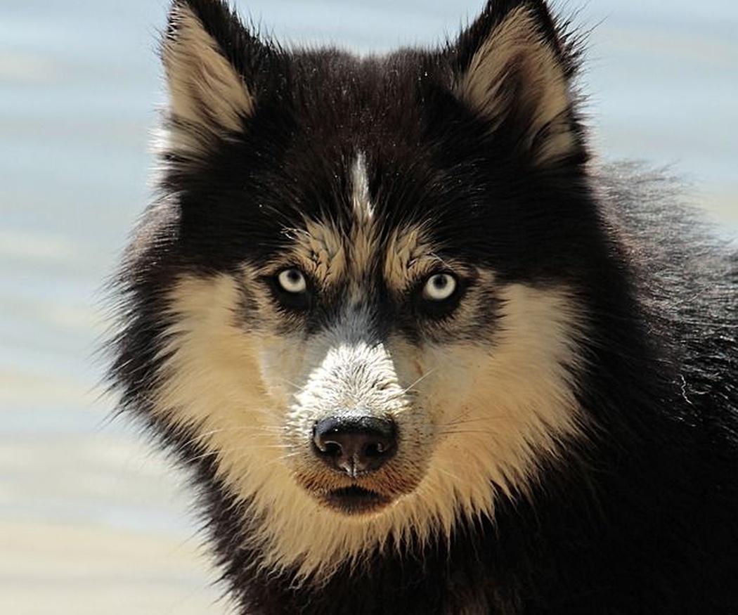 La importancia de la limpieza en los ojos de los perros