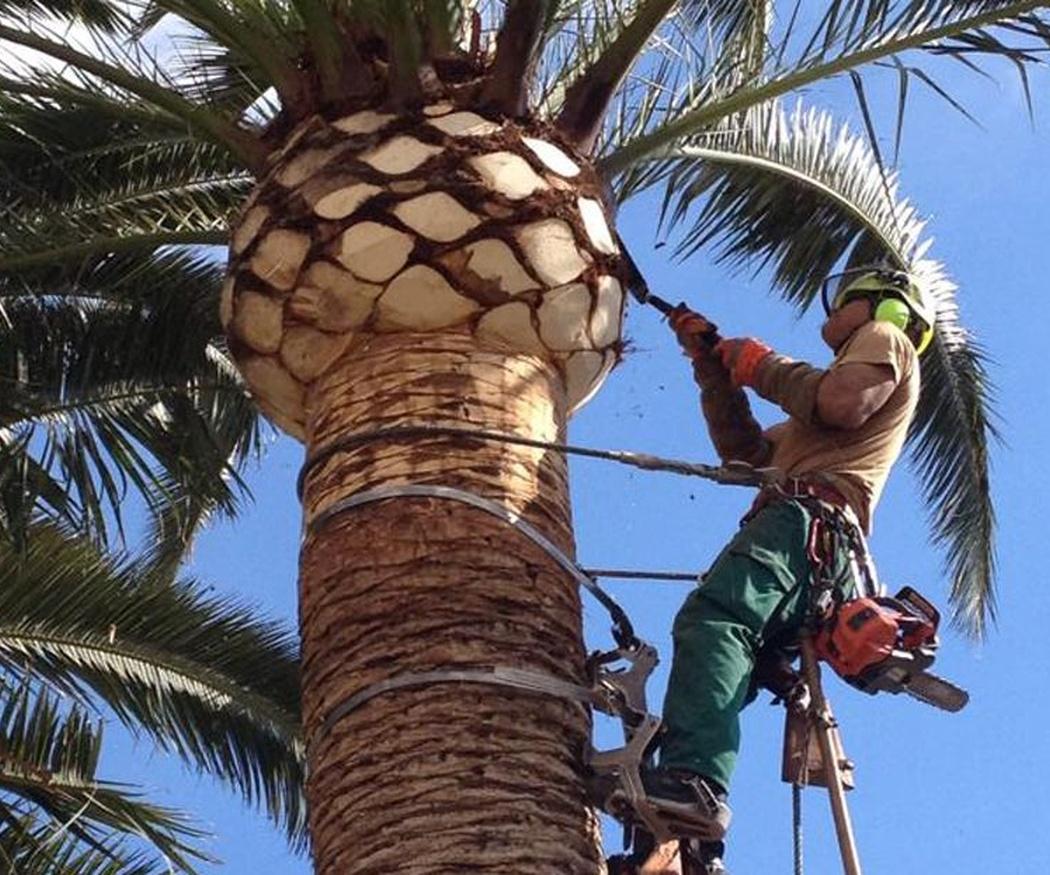 La seguridad en la poda de palmeras