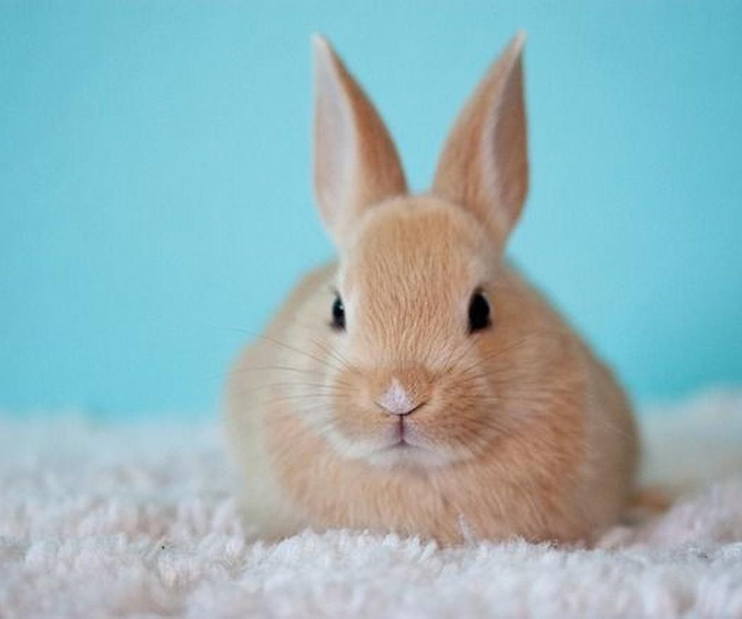 ¿Qué revisiones necesita un conejo?