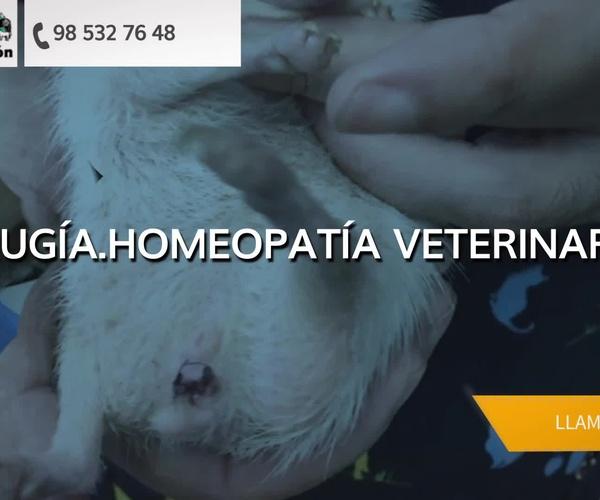 Veterinarios en Gijón | Asturcón Clínica Veterinaria