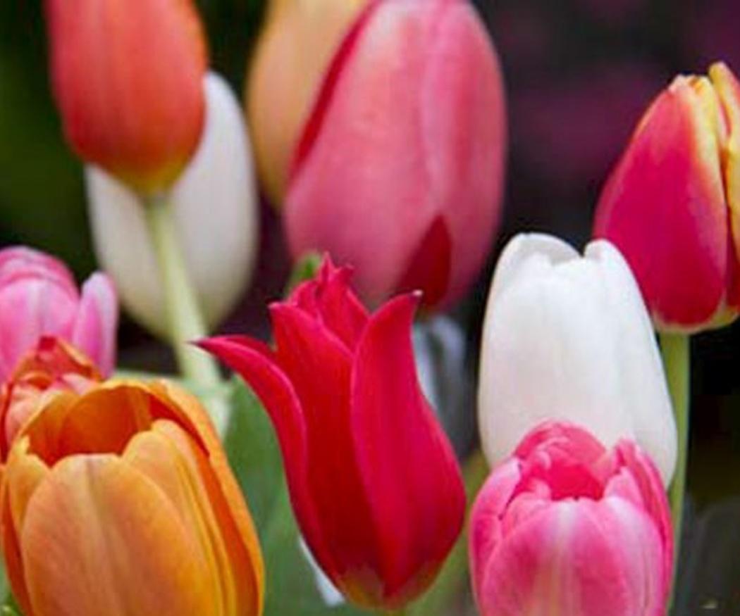 Los múltiples beneficios de tener flores en casa o en el trabajo