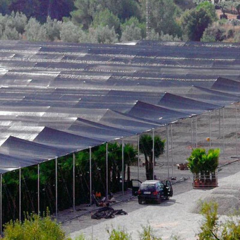 Invernadero Tipo Parral: Invernaderos de Invernaderos Campos