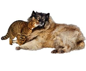 Medicina general canina y felina