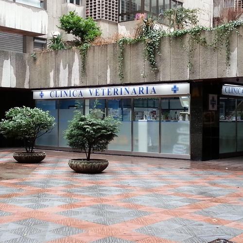 Veterinarios en León | Clínica Veterinaria Ricardo Díez Reyero