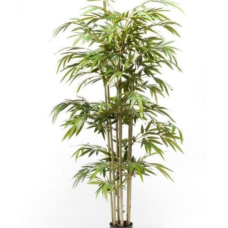 Árbol bambú acabado Eco: ¿Qué hacemos? de Ches Pa, S.L.