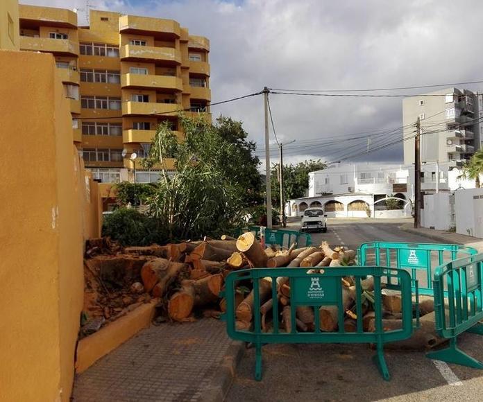 Tala de árboles en Ibiza