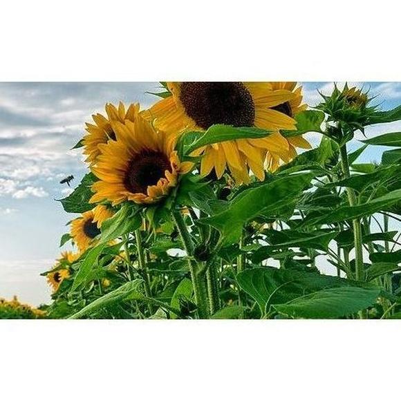 Ventajas energéticas: Servicios de SOLARFAM  INSTALACIONES FOTOVOLTAICAS