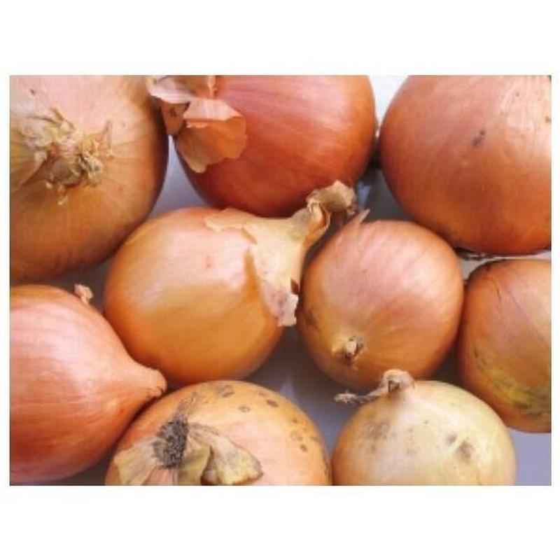 Cebollas: Productos de Mundifruit