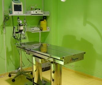 Medicina general: Servicios de Centro Médico Veterinario Pío 109