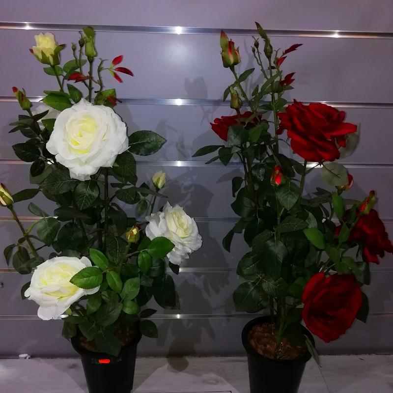 Rosal en maceta