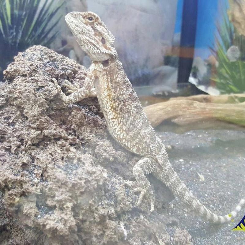 Reptiles: Productos y Servicios de Amazonas 1