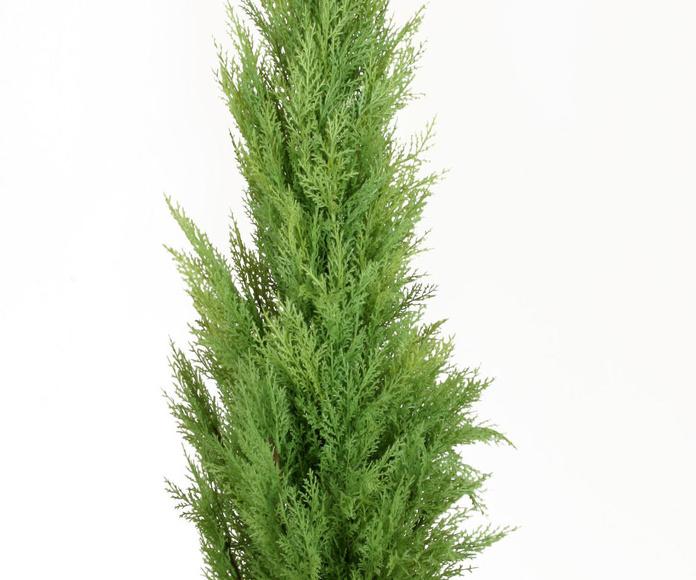 Árbol ciprés New 180cm con maceta