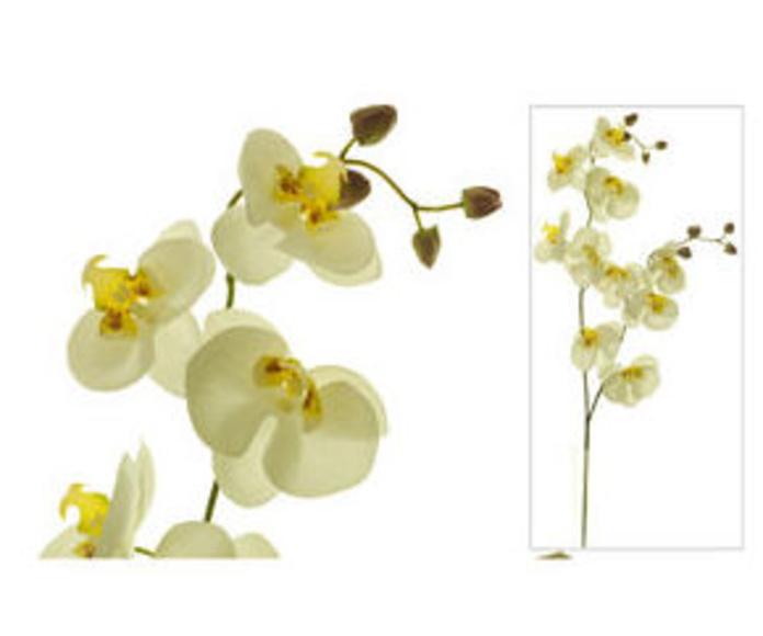 Orquídea x2 10 flores