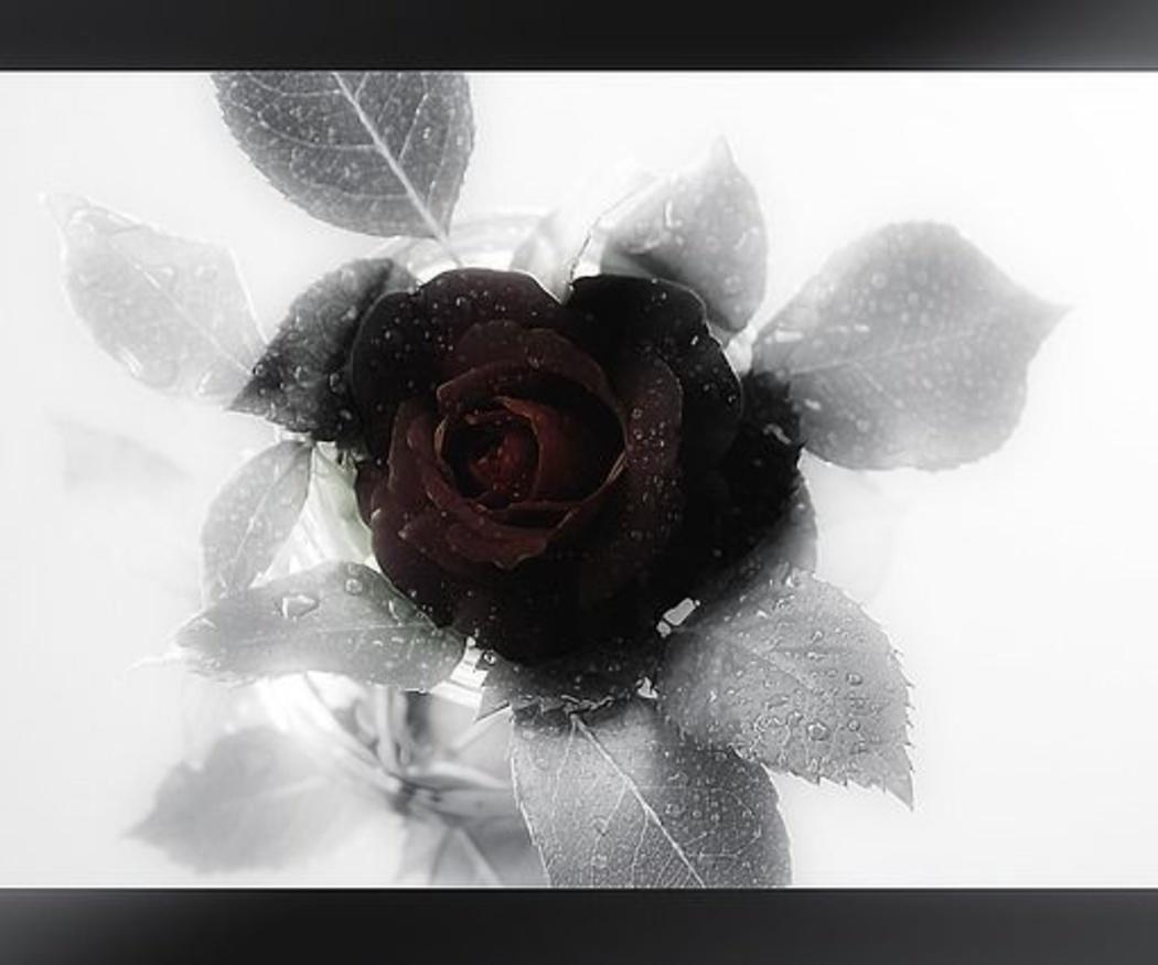 ¿Por qué vestimos de negro en los funerales?