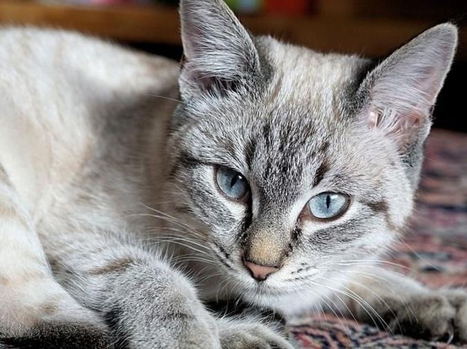 Los gatos y sus uñas