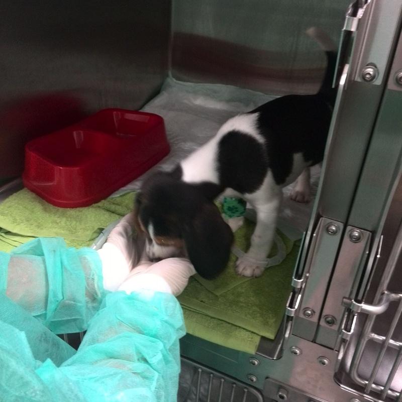 Atención veterinaria y cuidados intensivos