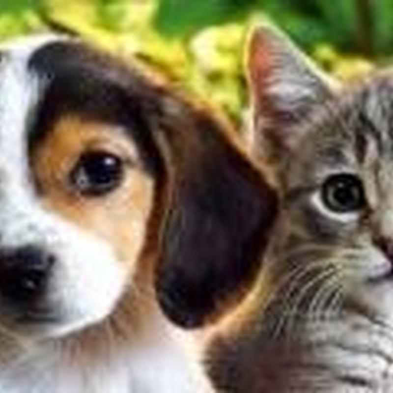 Bonos cachorro: SERVICIOS  de Argos Centro Veterinario