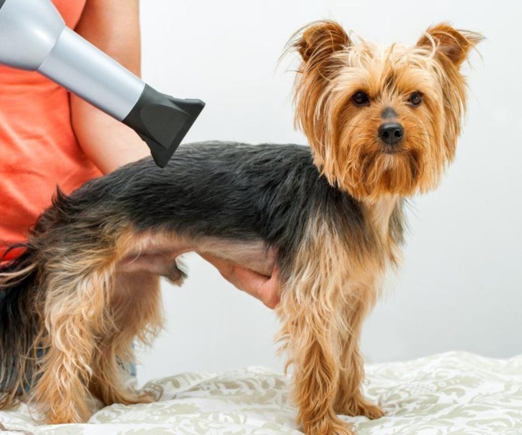 A tu perro también le gusta estar guapo y cómodo